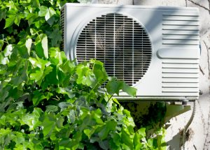 air conditioner and ivy